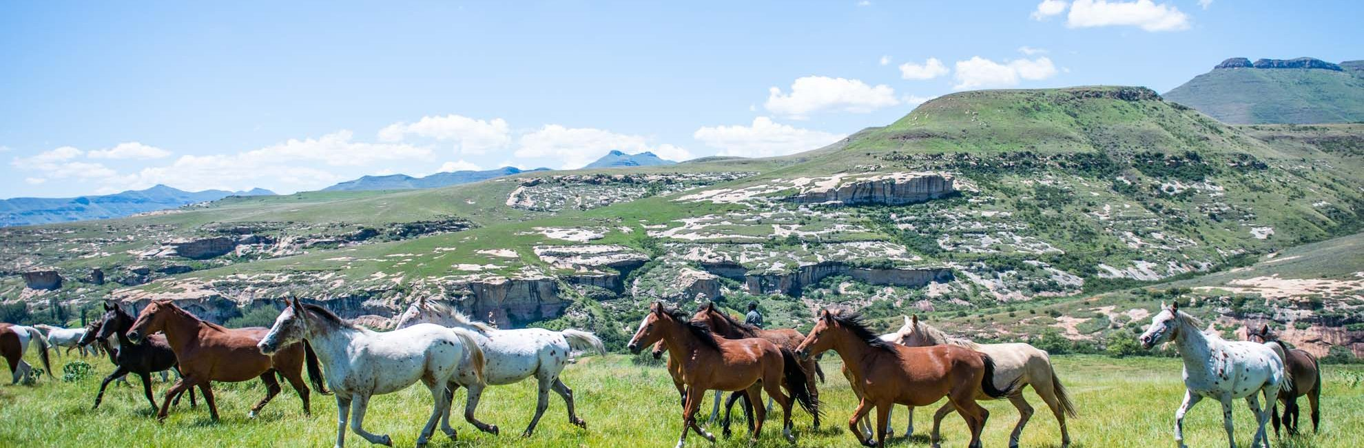 Horse riding per person - R230 for a 1-hour ride or R375 for 2 hours, clay pigeon shooting - R150 for 5 shots, archery - R50 for 5 shots
